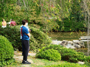 Young man with blue shirt, face mask, standing and viewing the pond at Shofuso.